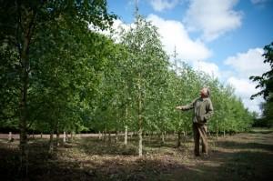 Will Garfit Trees