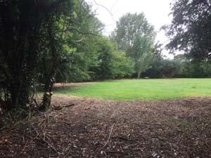 Willow Way woods 1